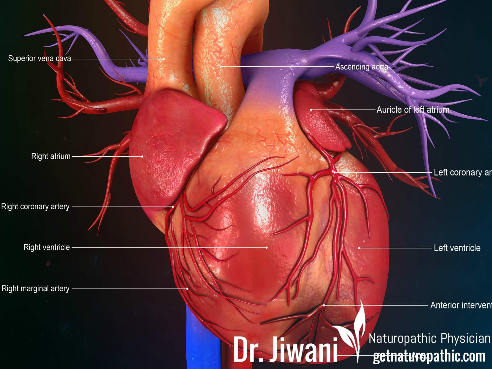 Calcium Supplements May Be Guilty of Causing Heart Attacks & Breast Cancer   Dr. Jiwani's Naturopathic Nuggets Blog