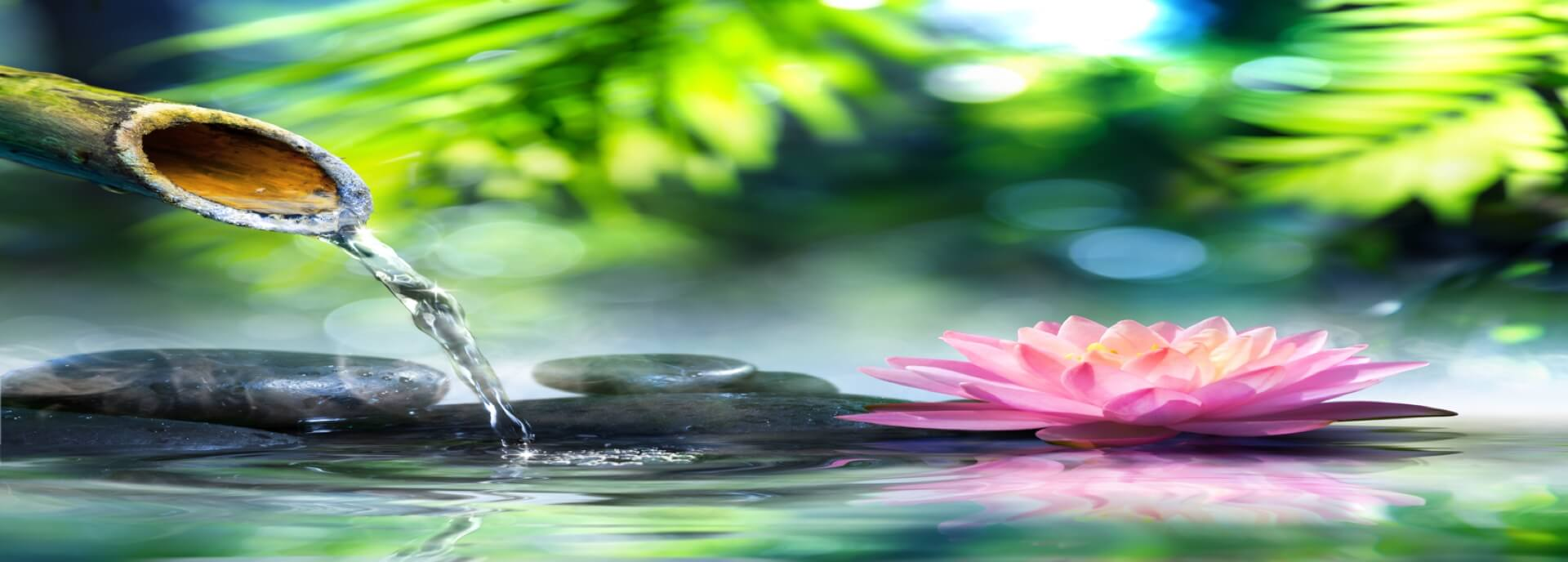 Get Naturopathic Dr. Tahira Jiwani Reviews Naturopathic Doctor Vancouver Burnaby Surrey